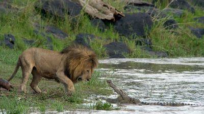 Africancats3